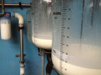 The cows are milked twice a day. (Photo attributed to Jordan Harris).